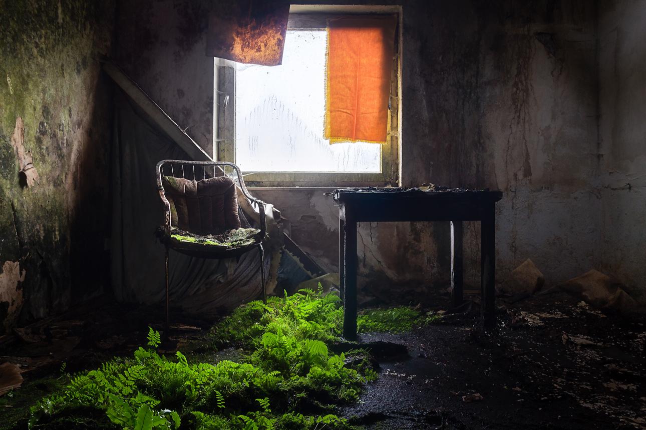 Indoor Plants For Dark Rooms Uk